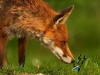 foxvsie-desktopnexus-com_